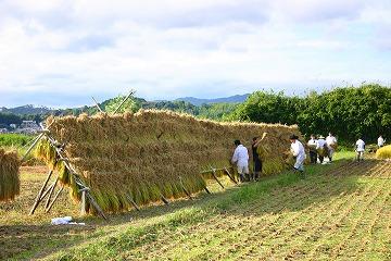 静岡県神道青年会 米作り